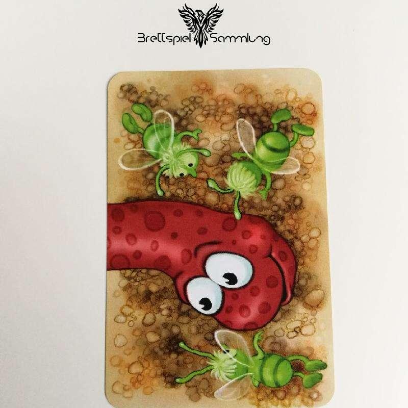 Streifen Toni Karte Wurmkopf Rot